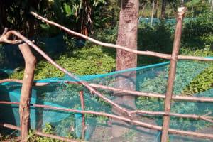 The Water Project: Gidagadi Community, Anusu Spring -  Garden