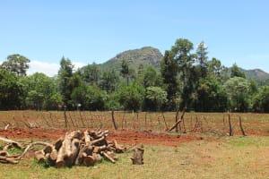 The Water Project: Chepkemel Community -  Farms