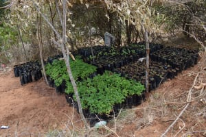 The Water Project: Kaani Community B -  Seedlings
