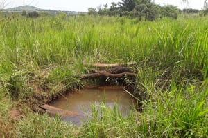 The Water Project: Byebega-Kirisa Community -  Current Water Source