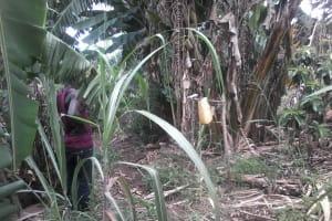 The Water Project: Rubani-Kyawalayi Community -  Hand Washing Station