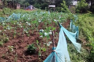 The Water Project: Ebusiratsi Special Primary School -  Farm Fenced With Mosquito Net