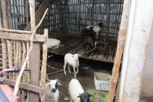 The Water Project: Benke Community, Waysaya Road -  Animal House