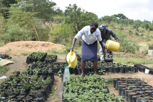 The Water Project: Kathama Community -  Tree Nursery