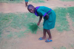 The Water Project: Chandolo Primary School -  Using Branches And Local Materials As Tools