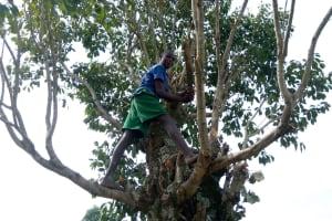 The Water Project: Futsi Fuvili Community, Shikanga Spring -  Cutting Fencing