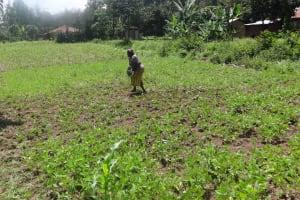 The Water Project: Shitungu Community, Omar Rashid Spring -  Community Members Working On A Farm