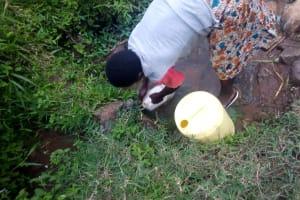 The Water Project: Mwituwa Community, Shikunyi Spring -  Fetching Water