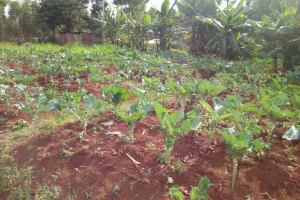 The Water Project: El'longo Secondary School -  School Farm