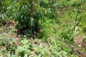 The Water Project: Musango Community, Jared Lukoko Spring -  Cassava And Pumpkin