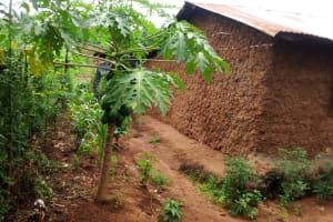 The Water Project: Shiyunzu Community, Imbukwa Spring -  Paw Paw Tree