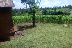 The Water Project: Musango Community, Jared Lukoko Spring -  Maize