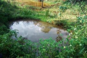 The Water Project: Shilakaya Community, Shanamwevo Spring -  Fish Pond By Spring