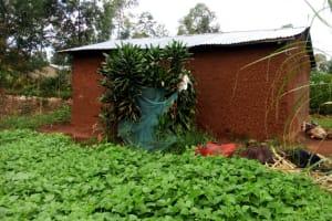 The Water Project: Shiyunzu Community, Imbukwa Spring -  Bathing Shelter