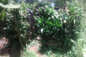 The Water Project: Mwituwa Community, Shikunyi Spring -  Natural Bathing Shelter