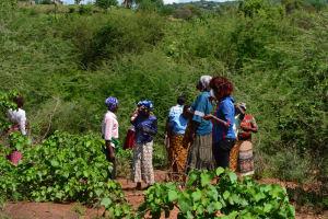 The Water Project: Katuluni Community -  Transect Walk