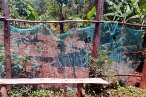 The Water Project: Wasenje Community, Margaret Jumba Spring -  Mosquito Net Garden Fence