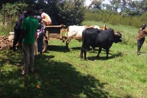 The Water Project: Matsakha A Community, Kombwa Spring -  Cart Delivering Materials