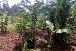 The Water Project: Wasenje Community, Margaret Jumba Spring -  A Nearby Farm