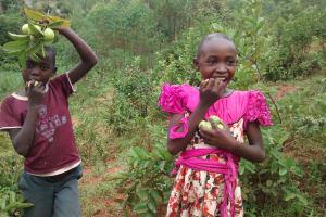 The Water Project: Shiru Community, Sammy Alumola Spring -  Children Eating Guavas