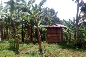 The Water Project: Wasenje Community, Margaret Jumba Spring -  Latrine Through Banana Farm