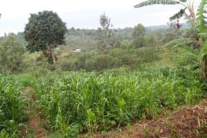 The Water Project: Chandolo Community, Joseph Ingara Spring -  Community Landscape