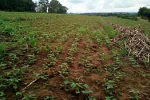 The Water Project: Ikonyero Community, Jesse Spring -  Farm
