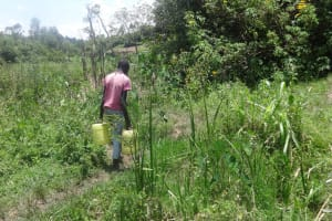 The Water Project: Masera Community, Salim Hassan Spring -  Carrying Water