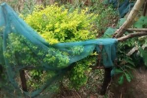 The Water Project: Jivovoli Community, Gideon Asonga Spring -  Mosquito Net