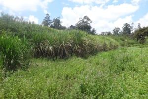 The Water Project: Masera Community, Salim Hassan Spring -  Community Landscape