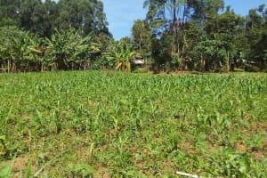 The Water Project: Luvambo Community, Tindi Spring -  Community Landscape