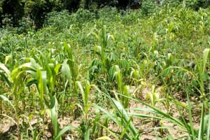 The Water Project: Muyundi Community, Baraza Spring -  Farm