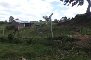 The Water Project: Ingavira Community, Laban Mwanzo Spring -  Animals Near The Spring