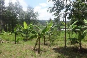 The Water Project: Masera Community, Ernest Mumbo Spring -  Bananas