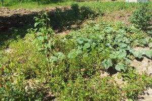 The Water Project: Matsakha Community, Mbakaya Spring -  Nearby Vegetable Garden