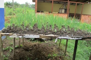 The Water Project: Yongoroo Community, New Life Clinic -  Clinic Garden
