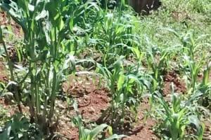 The Water Project: Jivovoli Community, Wamunala Spring -  Latrine