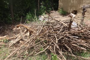 The Water Project: Masera Community, Salim Hassan Spring -  Firewood Collection