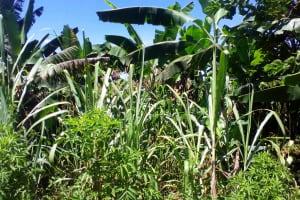 The Water Project: Lwangele Community, Machayo Spring -  Vegetation