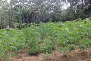 The Water Project: Ingavira Community, Laban Mwanzo Spring -  Farm