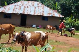 The Water Project: Jivovoli Community, Gideon Asonga Spring -  Household