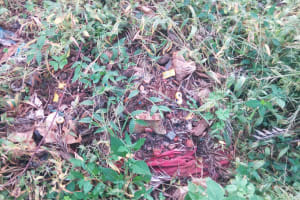 The Water Project: Chebwayi B Community, Wambutsi Spring -  Waste Decomposing By A Farm