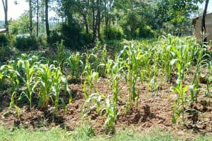 The Water Project: Muyere Primary School -  Schools Farm