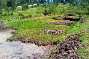 The Water Project: Musutsu Community, Mwashi Spring -  Community Members Preparing A Fish Pond