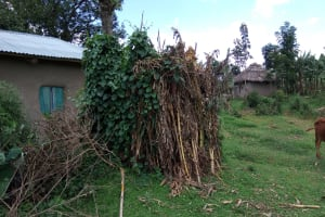The Water Project: Chegulo Community, Yeni Spring -  A Bathroom Made Of Dry Maize Stalks