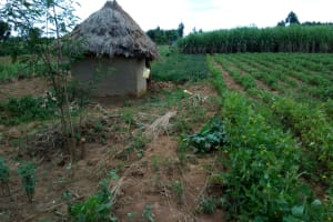 The Water Project: Chegulo Community, Yeni Spring -  Farm