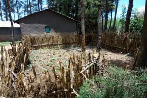 The Water Project: Chegulo Community, Werabunuka Spring -  A Kitchen Garden Fenced With Maize Stalks