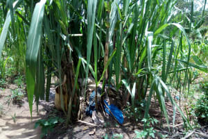 The Water Project: Chegulo Community, Werabunuka Spring -  Dirt Dumped At A Sugarcane Plant