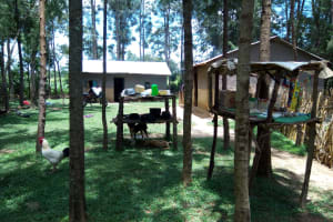 The Water Project: Chegulo Community, Werabunuka Spring -  Homestead With Rooster Roaming And Dogs Resting