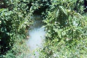 The Water Project: Lunyi Community, Fedha Mukhwana Spring -  Fedha Mukhwana Water Source